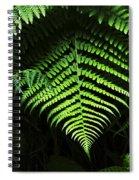 Fern Canyon California 1 Spiral Notebook