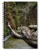 Fern Canyon Creek Spiral Notebook