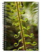 Fern Frond Spiral Notebook