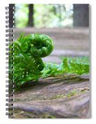Fern On Big Redwood Tree Art Prints Baslee Troutman Spiral Notebook