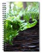 Fern On Redwood Tree Art Print Baslee Troutman Spiral Notebook