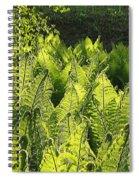 Fernery Spiral Notebook