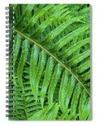 Ferns After A Spring Rain Spiral Notebook