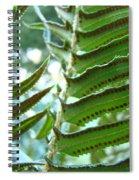 Ferns Art Prints Green Forest Fern Sunlit Giclee Baslee Troutman Spiral Notebook