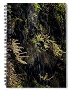 Ferns Below Falls By Jean Noren Spiral Notebook