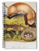 Ferret Spiral Notebook