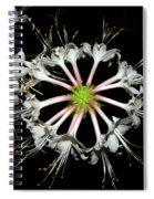 Ferris Wheel Spiral Notebook