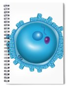 Fertilization, Pronuclei Formation Spiral Notebook