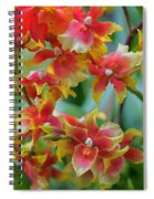 Festive Orchids Spiral Notebook