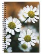 Feverfew Plant Spiral Notebook
