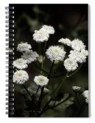 Feverfew - Tanacetum Parthenium Spiral Notebook