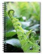 Fiddleback Fern Plant Unfurling In Springtime Spiral Notebook