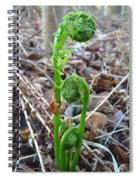 Fiddlehead Ferns In Spring Spiral Notebook