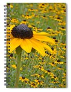 Field Of Coneflowers Spiral Notebook