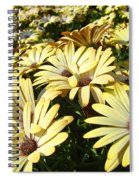 Field Of Daisies Landscape Floral Art Prints Daisy Baslee Troutman Spiral Notebook