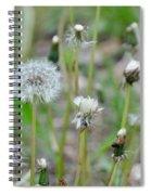 Dandelions In Seed Spiral Notebook