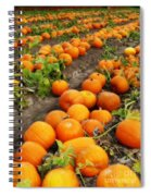 Field Of Pumpkins Card Spiral Notebook