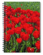 Field Of Red Tulips Spiral Notebook