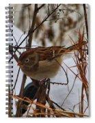Field Sparrow Spiral Notebook
