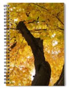 Fields Of Gold Above Our Heads Spiral Notebook