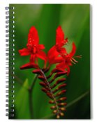 Fiery Lucifer Spiral Notebook