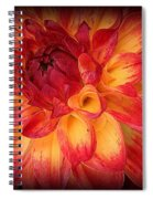 Fiery Red And Yellow Dahlia Spiral Notebook