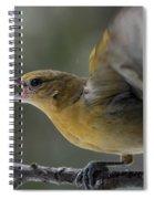 Fiesty Oriole Spiral Notebook