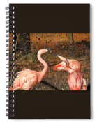 Fighting Flamingos Spiral Notebook