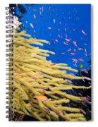 Fijian Reef Scene Spiral Notebook