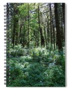 Filtered Forest Sunlight In Oregon Spiral Notebook