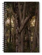 Filtered Sunlight Spiral Notebook
