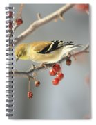 Finch Eyeing Seeds Spiral Notebook