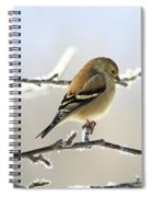 Finch On Frosty Perch Spiral Notebook