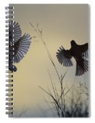 Finches Silhouette With Leaves 6 Spiral Notebook