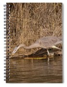 Finding Fish   Spiral Notebook