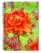 Fine Art Floral Art Prints Canvas Orange Rhodies Baslee Troutman Spiral Notebook