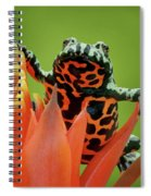 Fire-bellied Toad Spiral Notebook