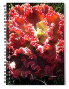 Fire Color Succulent. Curly Plant, Exotic Spiral Notebook