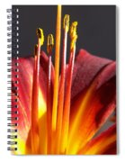 Fire Lily Spiral Notebook
