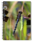 Fire Wing Dragon Spiral Notebook