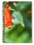 Firecracker Blossom Spiral Notebook