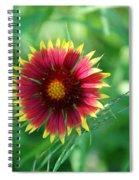 Firewheel In The Green Spiral Notebook
