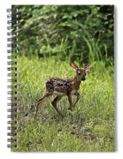 First Baby Fawn Of The Year Spiral Notebook