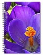 First Crocus Spiral Notebook