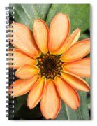 First Flower Grown Aboard Iss Spiral Notebook