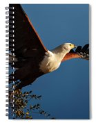 Fish Eagle Taking Flight Spiral Notebook