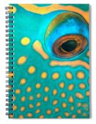 Fish Eye Spiral Notebook