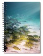 Fish Swim In The Light Spiral Notebook