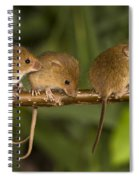 Five Eurasian Harvest Mice Spiral Notebook