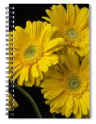 Five Gerbera Daisies Spiral Notebook